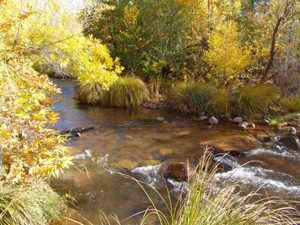 Oak creek with fall leaf colors on trees in Sedona; symbolizes inspiration and ceremony outdoor programs we do at this site