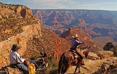 mules are still seen on Grand Canyon trails today