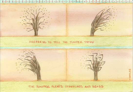 Junipers flex in different directions in this drawing my Teresa Settles representing them telling their story.