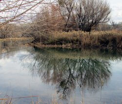 Verde River lagoon park with winter tree reflection on water represents nature setting, seeking signs, divining walk, mid-winter special program