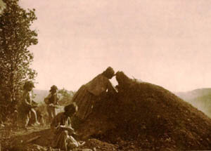 Apache women loading a agave roasting mound--historical image.