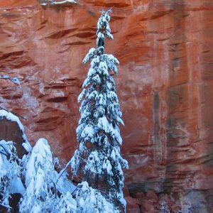 Red cliff in Sedona with snow on fir tree symbolizes mystic nature shamanic journey and ceremony outdoor workshop