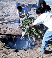 Men place corn stalks into a fire pit for roasting. Means iimportance of growing corn as the center of the ceremonial cycle.