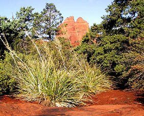 Sedona vision quest, nature connection, mystic nature
