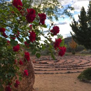Red roses in bloom and labyrinth. Symbolizes spring renewal and ceremony.