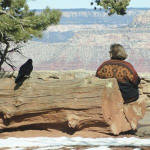 Raven sitting next to woman on bench by Grand Canyon; symbolizes nature connection experiences and wonder of creation