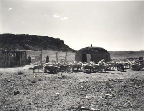 Traditional Navajo hogan and sheep--historic image.
