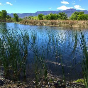 Verde River Lagoon, seek signs in nature, shamanic journey, ceremony, visioning