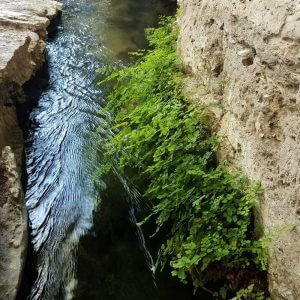 sacred spring water in prehistoric irrigation canal, re-birthing ceremony