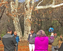 Group doing a ceremony in meadow under sycamore trees symbolizes ceremony circles during Sedona outdoor programs with Crossing Worlds Journeys & Retreats