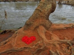 Red heart shape at base of tree next to Oak Creek represents nature connection, noticing signs, joyful outdoor program